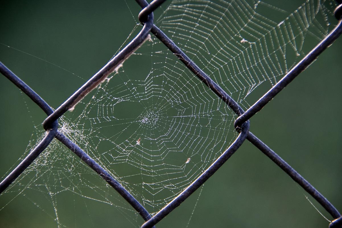 Spider Webs (4)