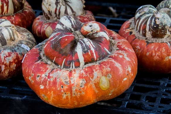 Pumpkins (1)