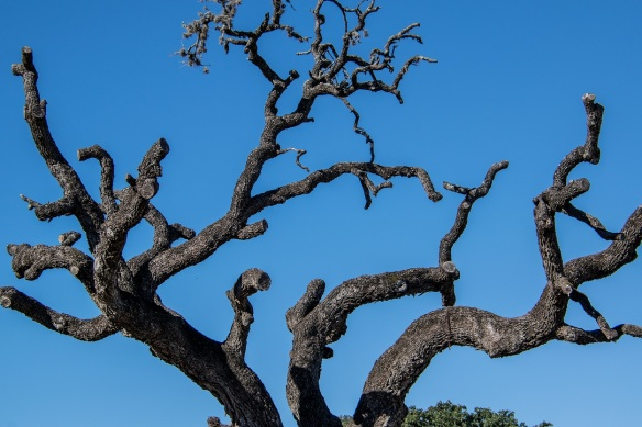 Trees in Waring (1)