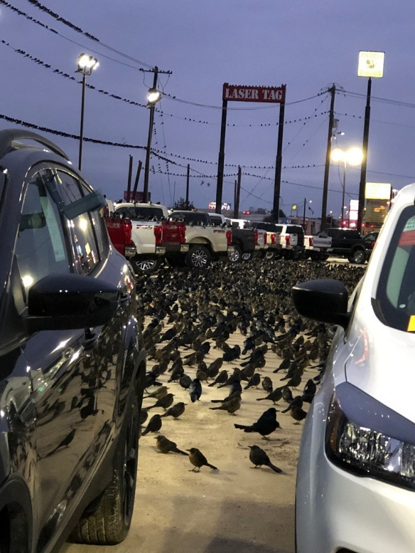 00s Birds at Ford Dealership (3)