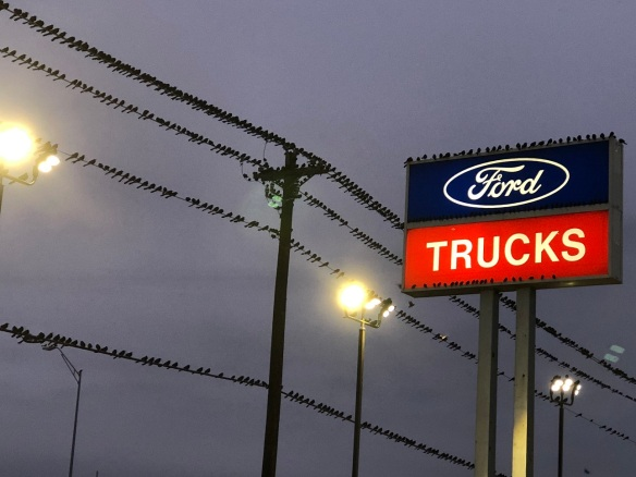 00s Birds at Ford Dealership (6)