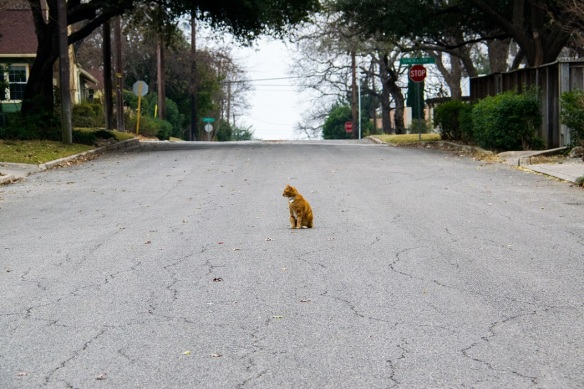 Cat in the street (3)