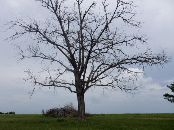 00s Dead Tree