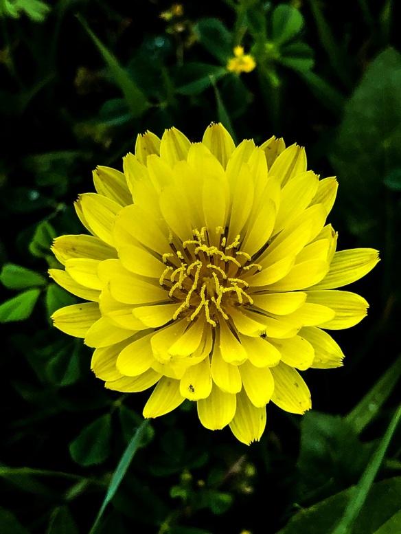 Flowers (4)