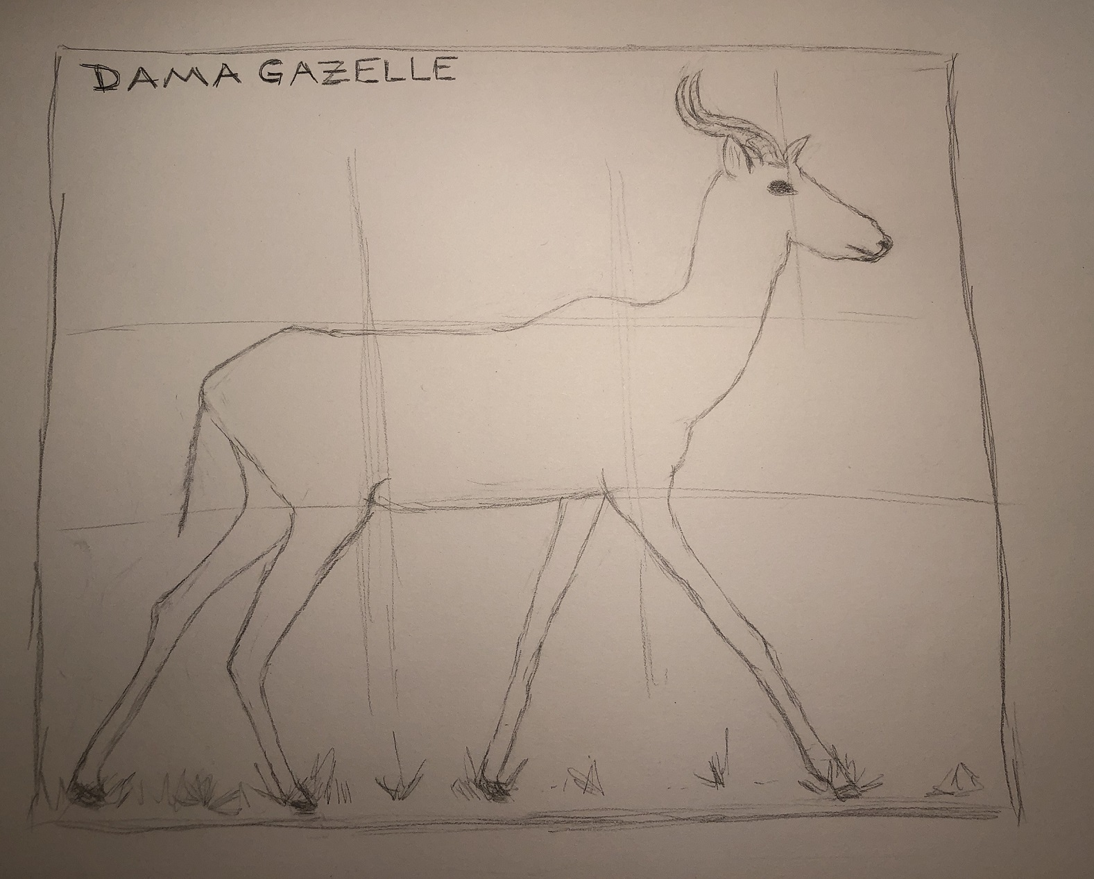 Dama Gazelle, from Africa