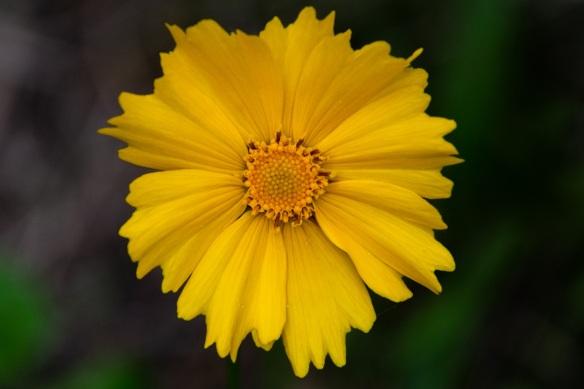 Lakeway flower