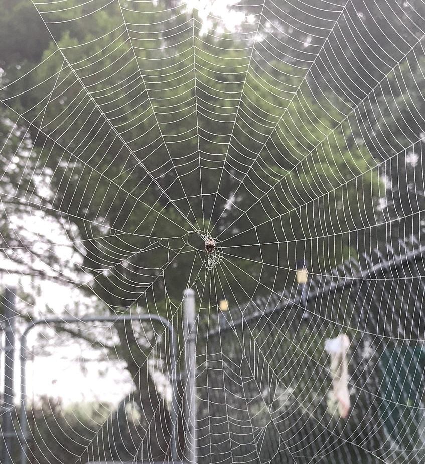 00s Spider Webs 2018 05 (1)
