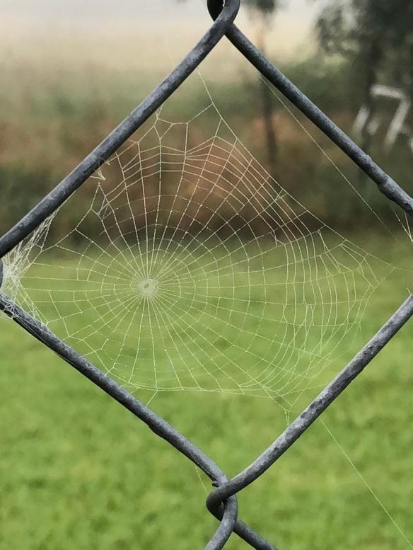 00s Spider Webs 2018 05 (2)