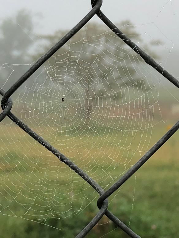 00s Spider Webs 2018 05 (3)