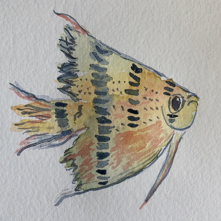 00s 16 Angelfish