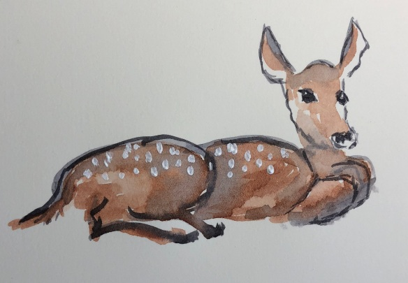 00s 17 Fawn