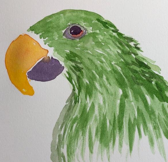 00s 21 Parrot
