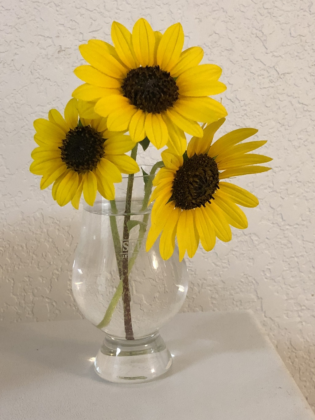 00s Sunflowers in small vase