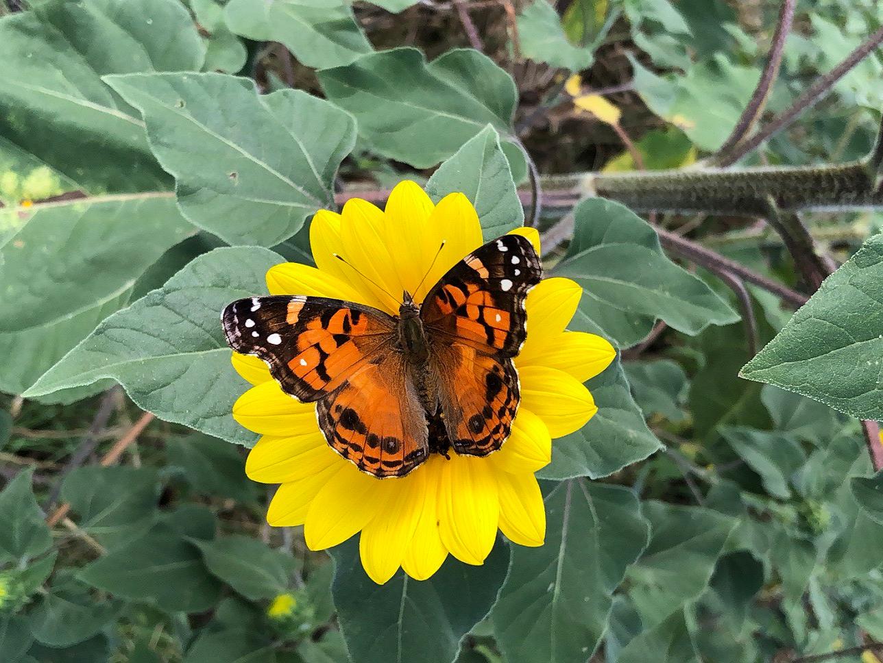 00s Butterfly (11)