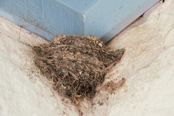 00s Swallow Nest