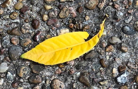 00s Yellow Leaf