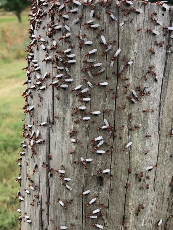 00s Ants
