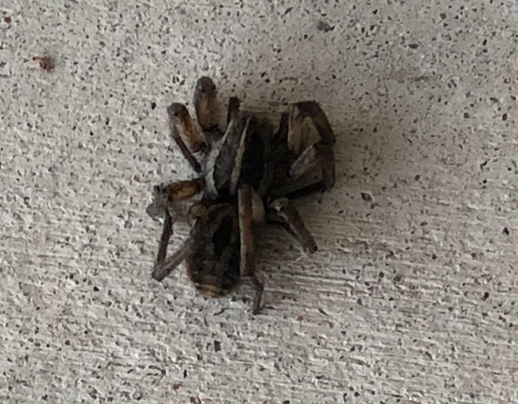 00s Spider on front porch