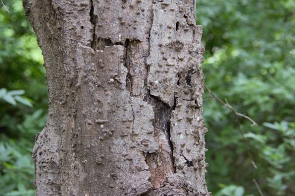 00s Tree bark (2)