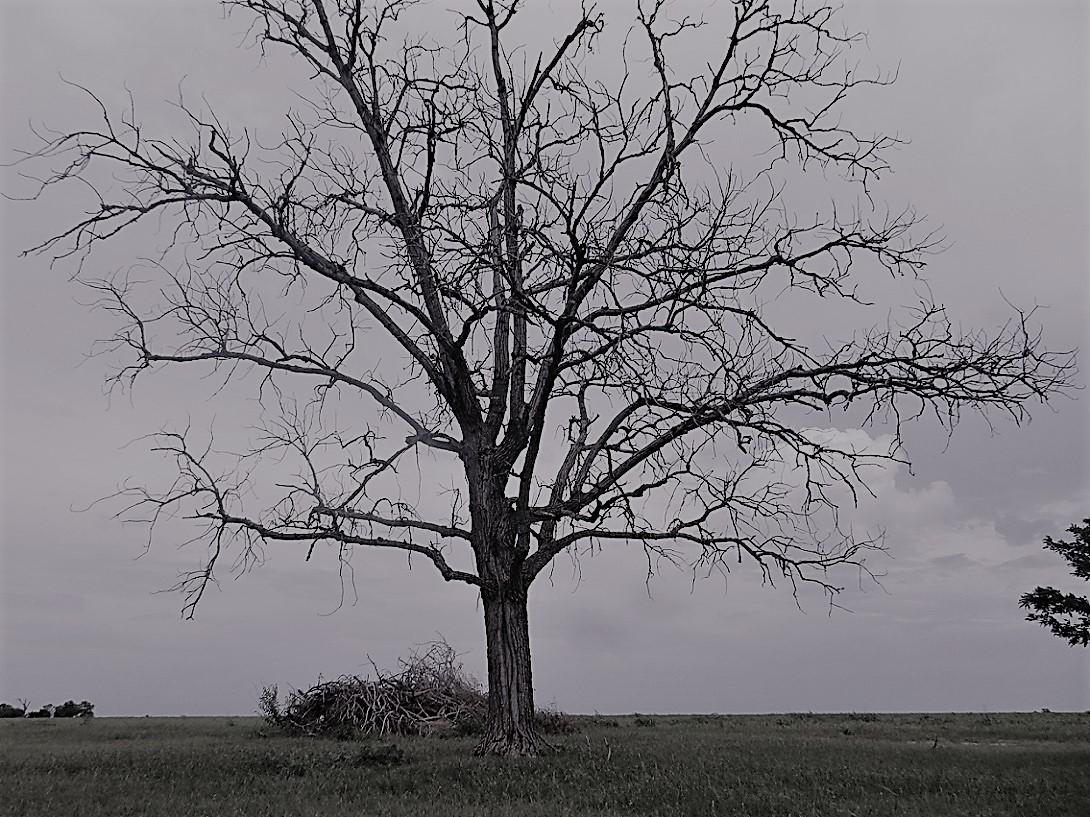 00s Dead Tree - Slate