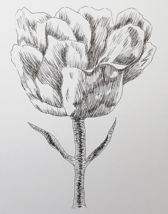 00s 18 Tulip