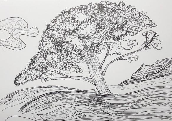 00s 24 Bonaventure Pine