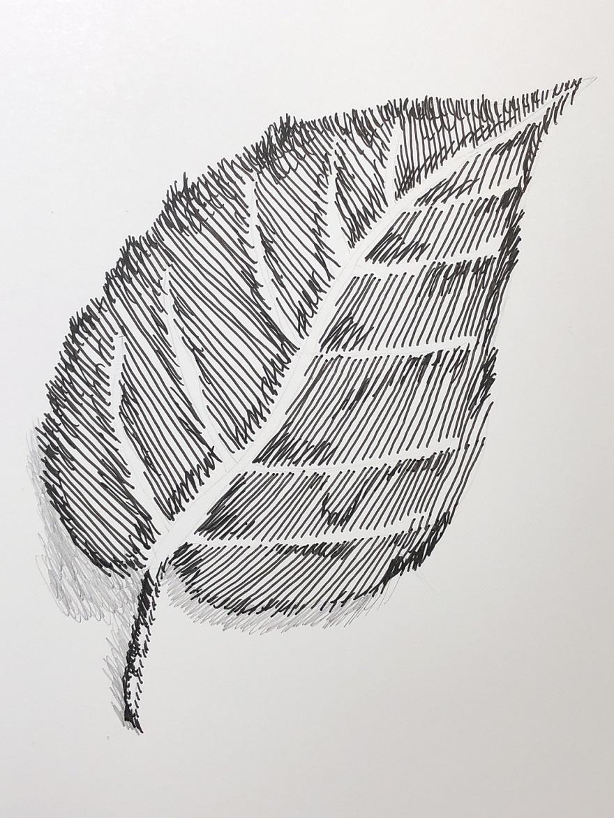 00s 25 Leaf